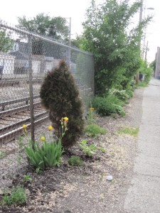 plants by train tracks